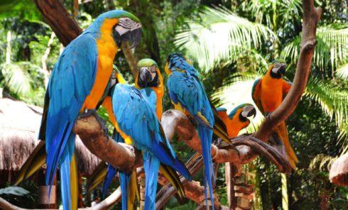 Parque-Das-Aves-Foz-de-Iguazú-660x400
